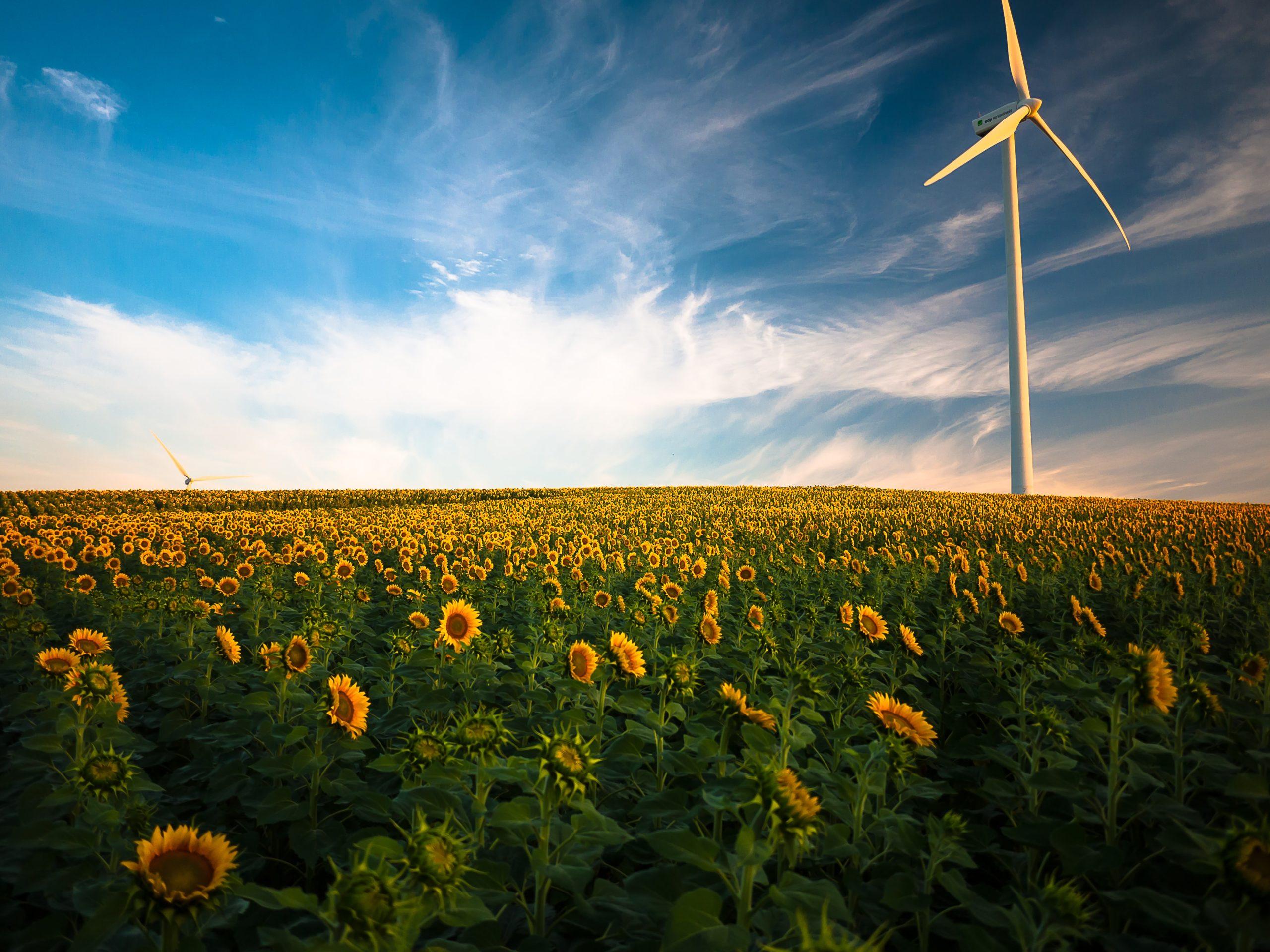 La Taxonomie européenne sur les investissements verts : financer durablement la transition environnementale