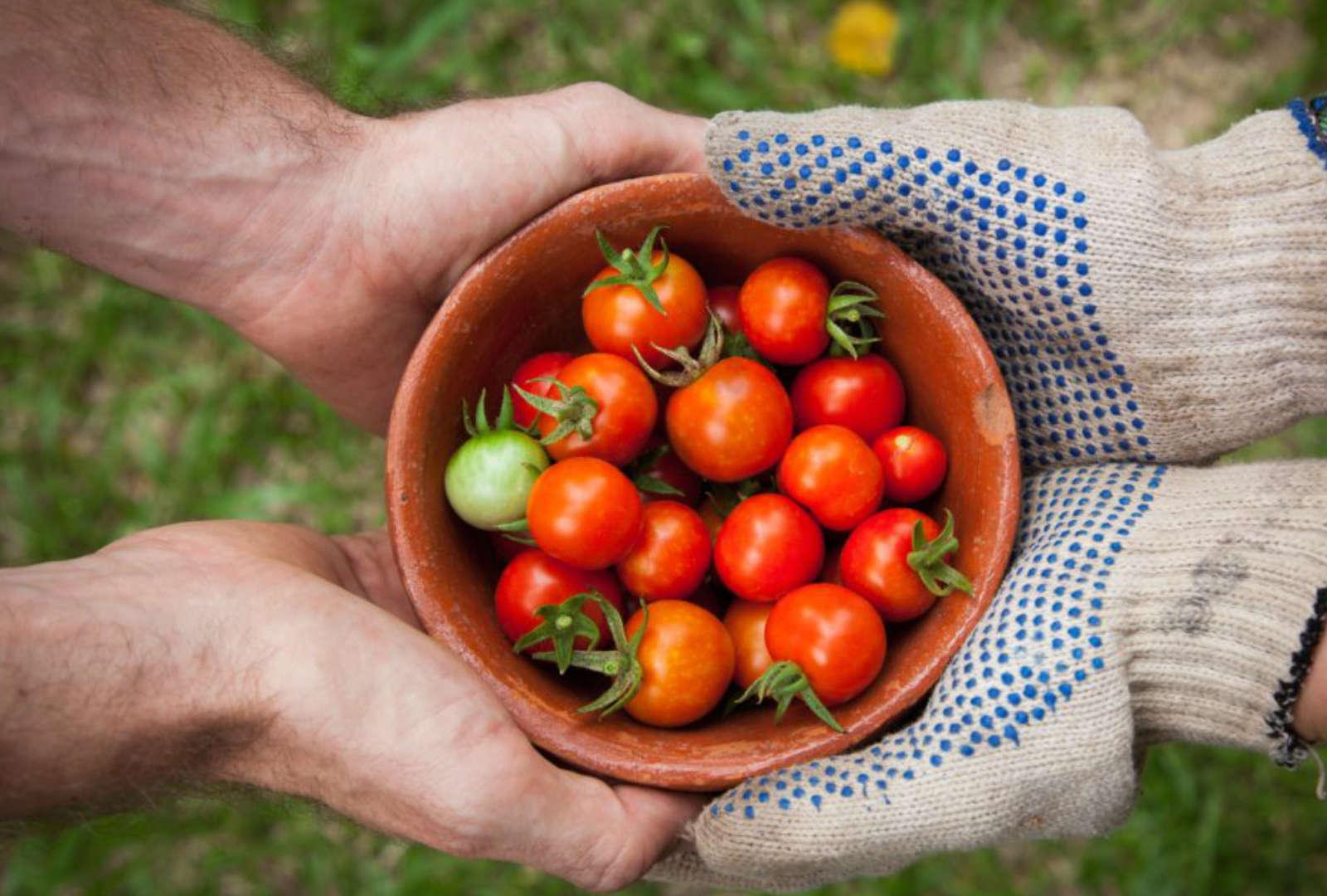 Covid-19: une aide financière spécifique pour les entreprises actives dans la production primaire de produits agricoles et dans l'aquaculture